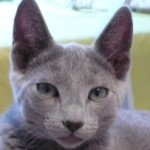 Profile picture of Joaquim